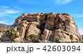 アメリカ・ジョシュア・ツリー国立公園の奇岩群 42603094