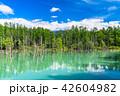 青い池 池 晴れの写真 42604982