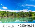 青い池 池 晴れの写真 42604984