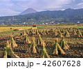 風景 富士山 世界遺産の写真 42607628