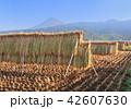 風景 富士山 稲の写真 42607630