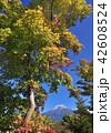 自然 富士山 晴れの写真 42608524