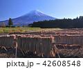 富士山 稲 晴れの写真 42608548