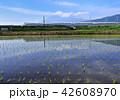 風景 富士山 新幹線の写真 42608970