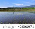 風景 富士山 新幹線の写真 42608971