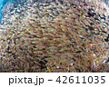 魚群 魚 海中の写真 42611035