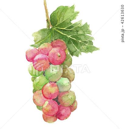 葉 ぶどう 葡萄 ピオーネ 42613630