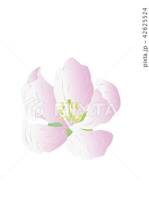都道府県の花シンプル青森リンゴ 42625524