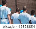 野球 メガホン 人物の写真 42628854