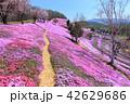 東藻琴芝桜公園<満開> 42629686