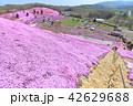 東藻琴芝桜公園<満開> 42629688