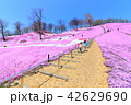 東藻琴芝桜公園<満開> 42629690