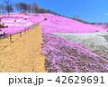 東藻琴芝桜公園<満開> 42629691