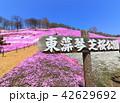 東藻琴芝桜公園<満開> 42629692