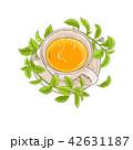 ステビア プランツ 植物のイラスト 42631187
