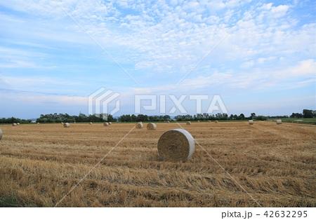 牧草ロール 42632295