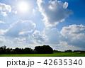 見沼田んぼと夏空 42635340