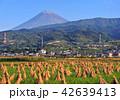 富士山 富士市 田んぼの写真 42639413