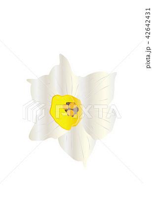 都道府県の花シンプル福井スイセン 42642431