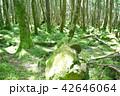 長野県、八ヶ岳の白駒の森と苔 42646064