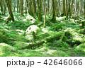 長野県、八ヶ岳の白駒の森と苔 42646066