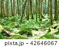 長野県、八ヶ岳の白駒の森と苔 42646067