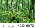 長野県、八ヶ岳の白駒の森と苔 42646072