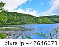 長野県、八ヶ岳の白駒の池 42646073