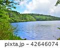 長野県、八ヶ岳の白駒の池 42646074