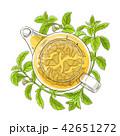 ステビア お茶 ベクトルのイラスト 42651272