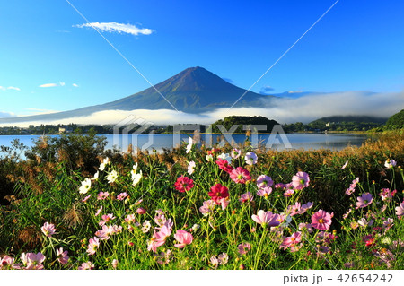 富士山 河口湖 秋 世界遺産 42654242