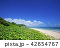 グンバイヒルガオ ビーチ 宮古島の写真 42654767
