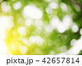 Blurred foliage background 42657814