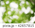 Blurred foliage background 42657815
