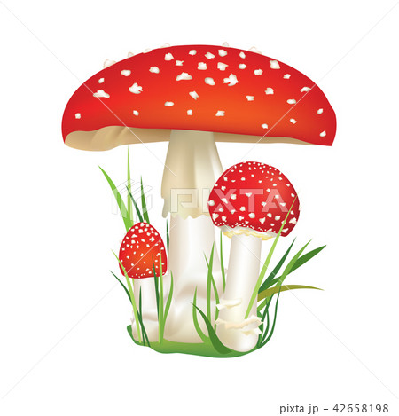 Red poison Death-cup mushroom. Dangerous Food. 42658198