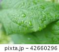 新緑 雨 梅雨 42660296