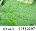 新緑 雨 梅雨 42660297