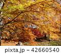 秋の色に染まったメタセコイア 42660540