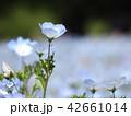 植物 花 青色の写真 42661014