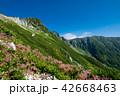 夏山 木曽駒ヶ岳 夏の写真 42668463