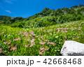 夏山 木曽駒ヶ岳 夏の写真 42668468