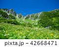 夏山 木曽駒ヶ岳 夏の写真 42668471
