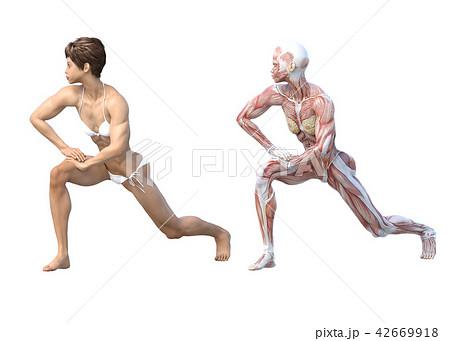 女性 解剖 筋肉 3DCG イラスト素材 42669918