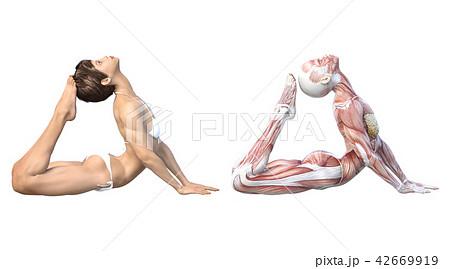 女性 解剖 筋肉 3DCG イラスト素材 42669919