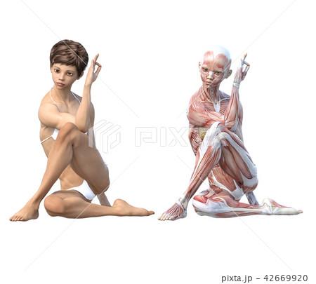 女性 解剖 筋肉 3DCG イラスト素材 42669920