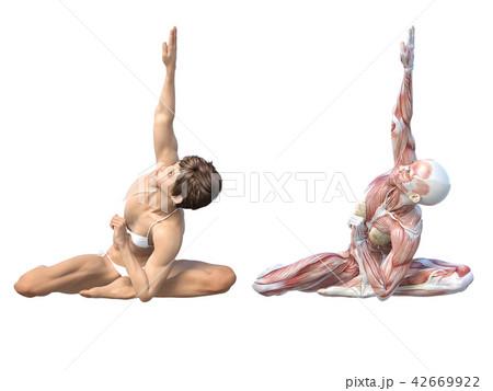 女性 解剖 筋肉 3DCG イラスト素材 42669922