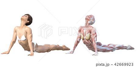 女性 解剖 筋肉 3DCG イラスト素材 42669923