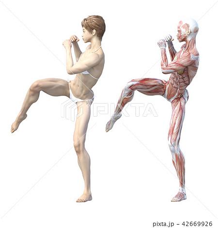 女性 解剖 筋肉 3DCG イラスト素材 42669926