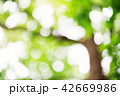 Blurred foliage background 42669986