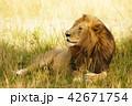 lion 1 42671754